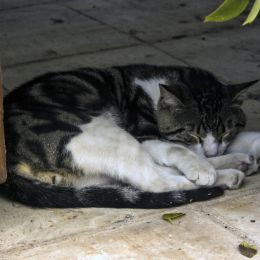 Theabsolutetomcat