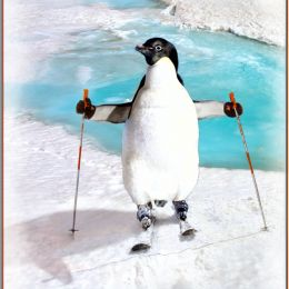 SkiingPenguin