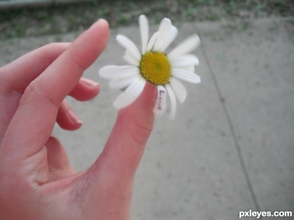 Falling daisy