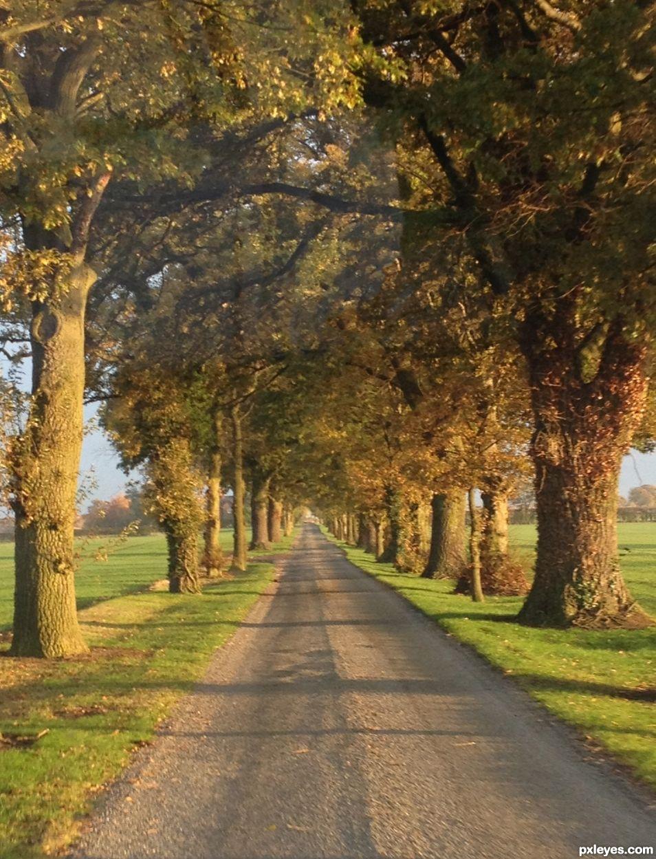 The Long Driveway