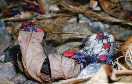 Teenage June Stink Bug Beetles