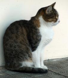 Independantcat