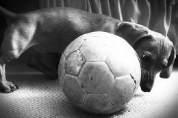 Dogfootball