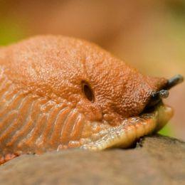 Molluscophobia