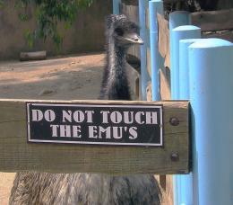 Extreme Ornithophobia!