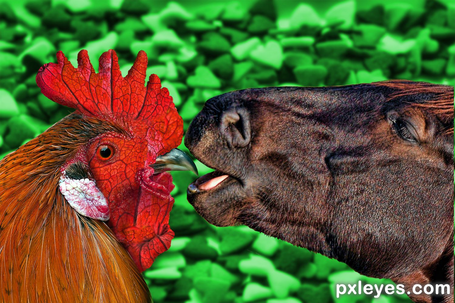 Image result for horse and rooster