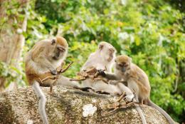 monkeyspickingme
