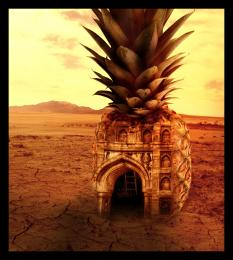 In a Desert