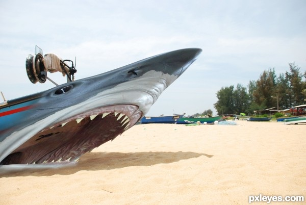 boat shark