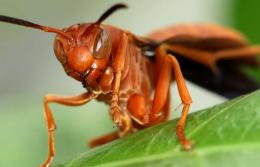 To a Wasp Picture