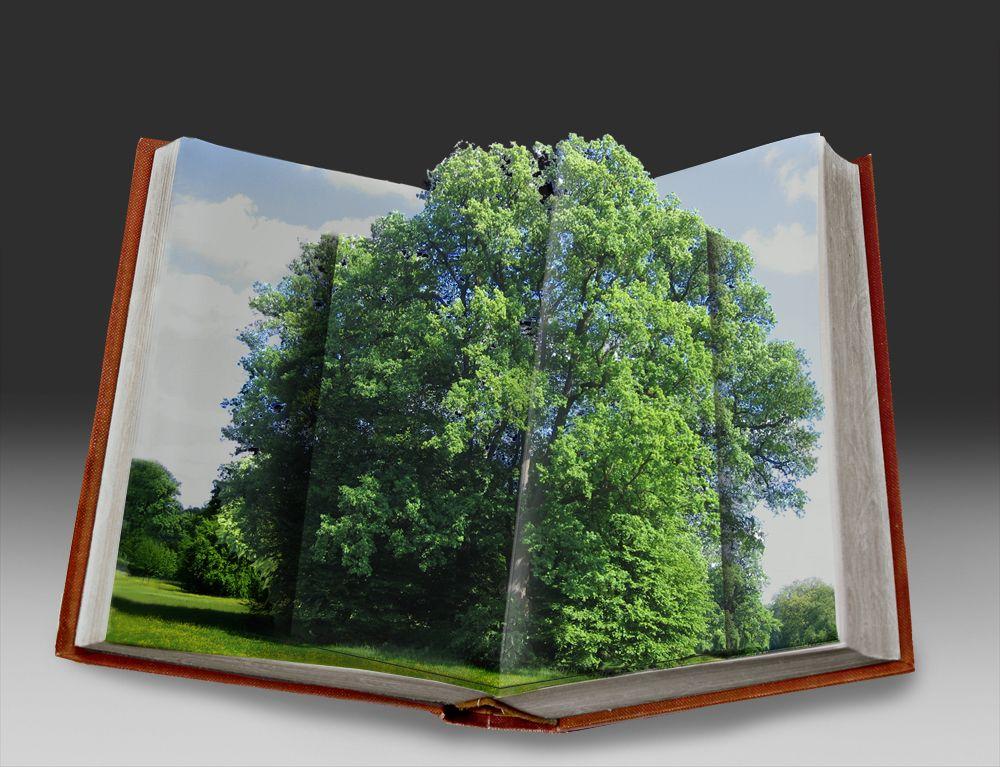 40e3ddef8b4bd5 my book picture