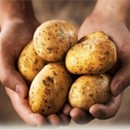 potatoes photography contest