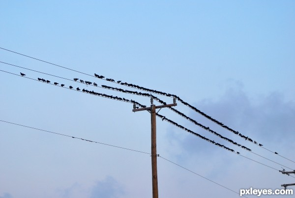 A little pole, a little wire, a lot of birds