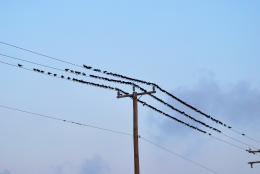 Alittlepolealittlewirealotofbirds