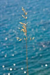Onsea