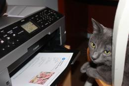 Cat at the Printer