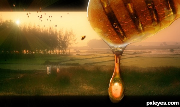 Honey Fields