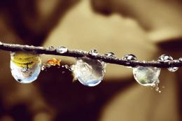 Fantasy Droplets Picture