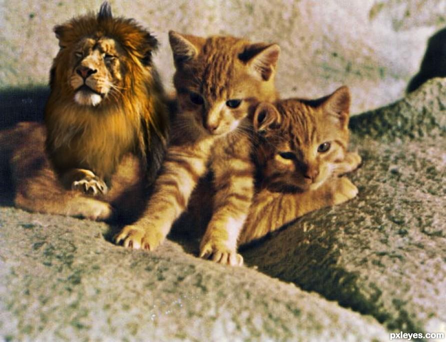 Une, Deux, Trois Cats