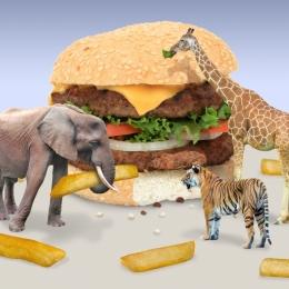 junglefood