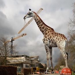 Giraffecrane