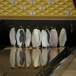 PenguinBowling