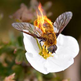 Tasty pollen