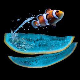 Jumpingfish