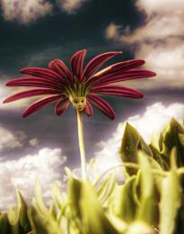 Little Cute Flower