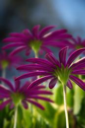 flowerinfocus