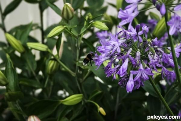 Bumble bee landing