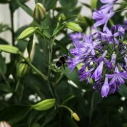Bumblebeelanding
