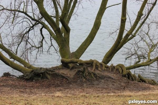 Arboria (Planet of Tree Men)