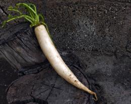 Rforradish