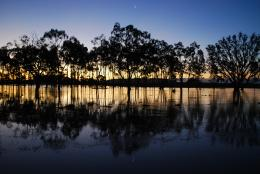 floodedpaddock