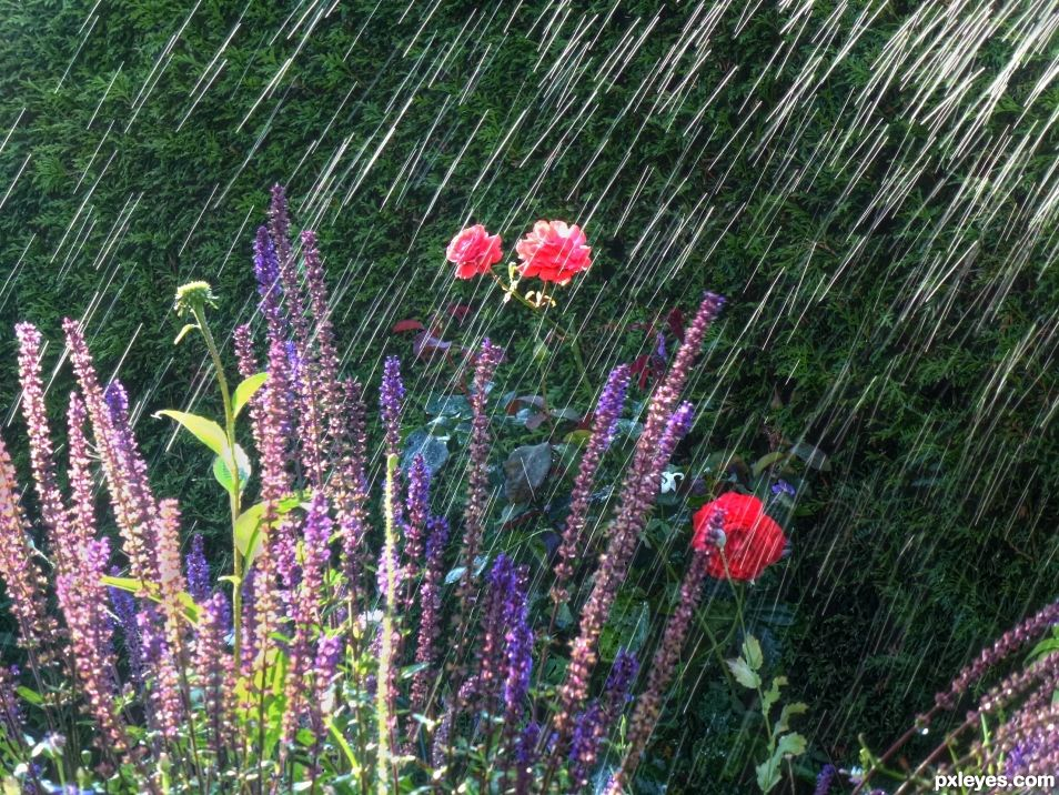 Flowers in the Rain