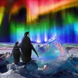 Aurora Borealis Picture