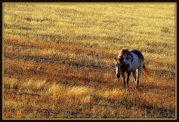 Prairie Drifter