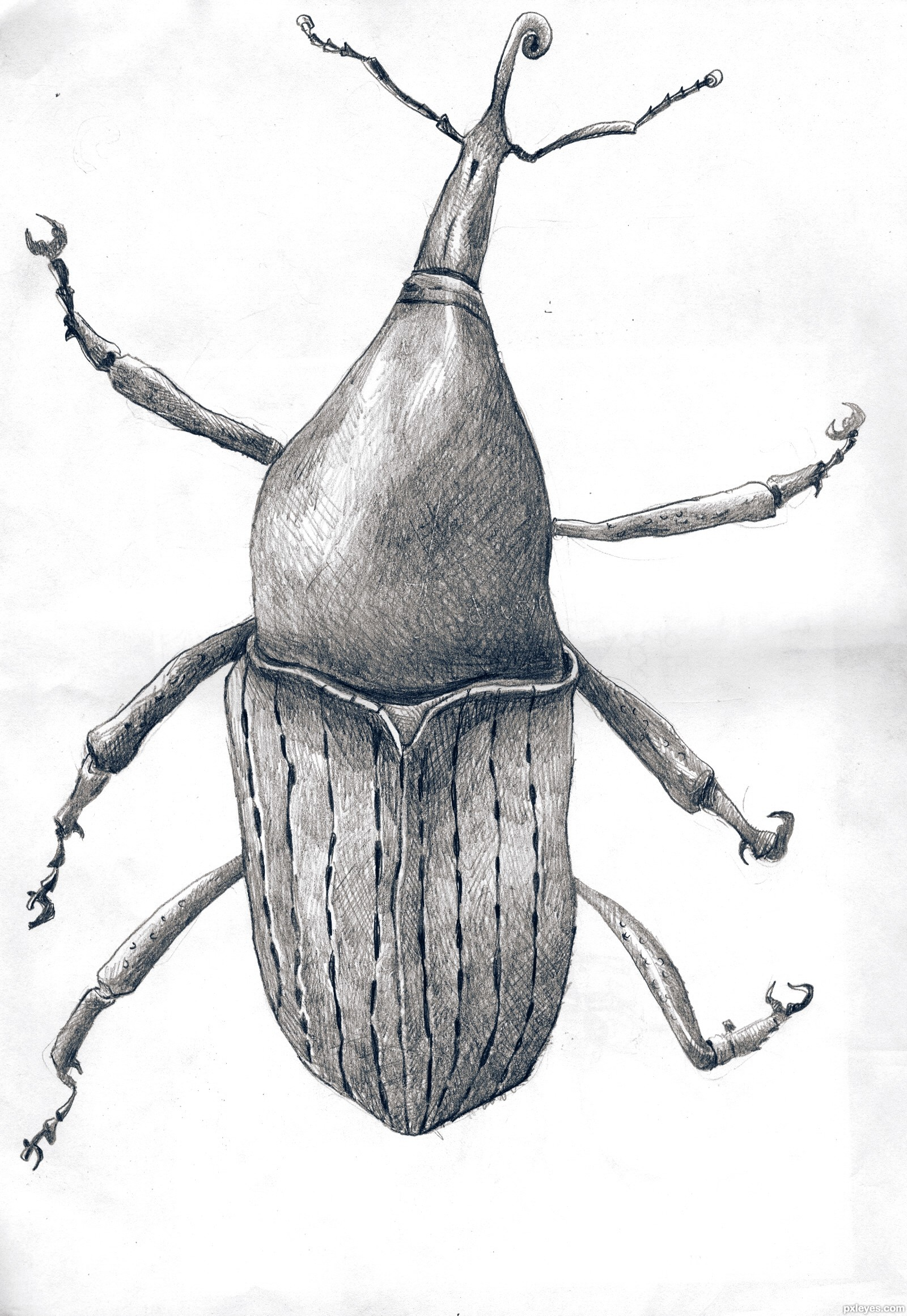 1000 Images About Insect Drawings On Pinterest Sketchbooks