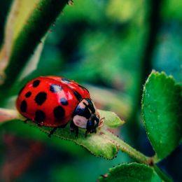 LadybugLadybird