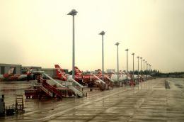 Red birds parking