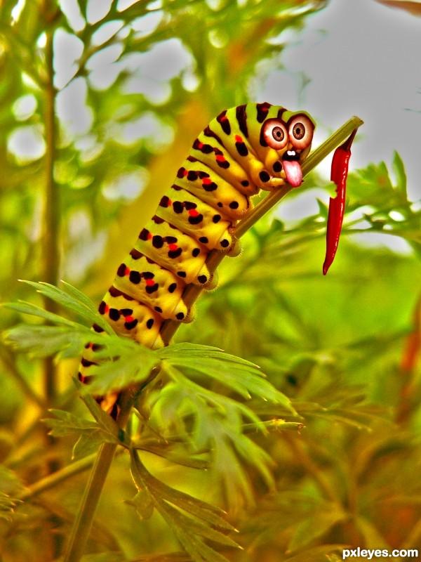 Silly caterpillar