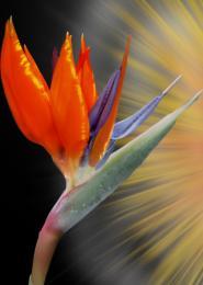 Chiliinparadise