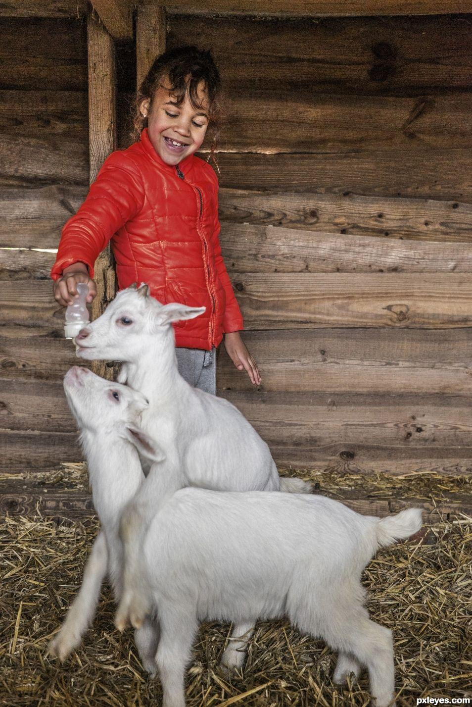 Red coat vs white goat