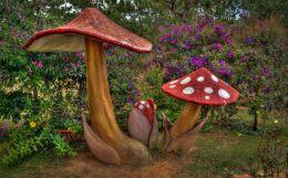Red and White Fungi