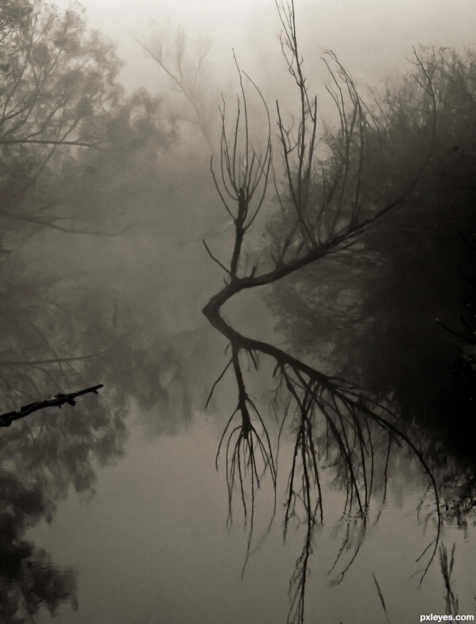 Foggy Swamp