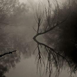 FoggySwamp