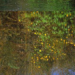 Reflectswell