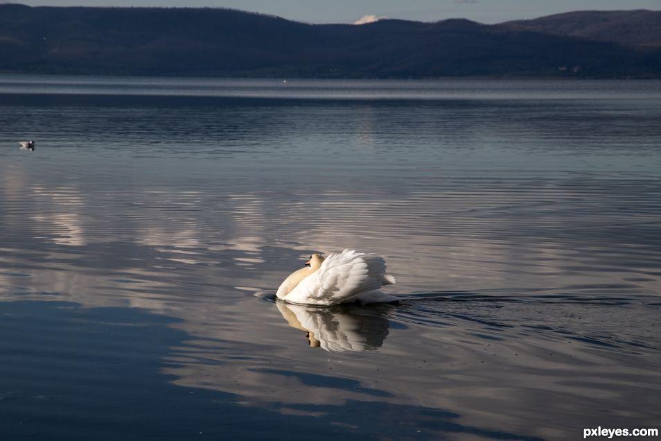 Speedy swan