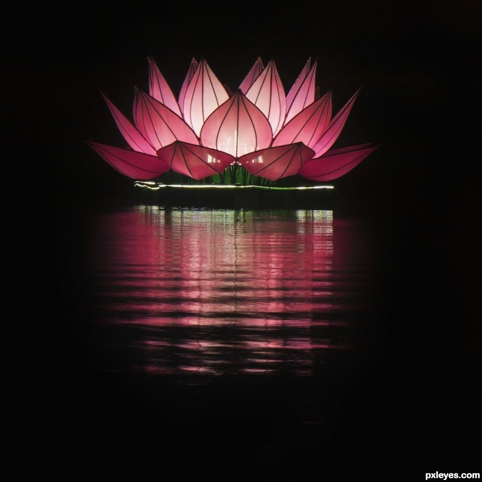 Pink Floating Lotus